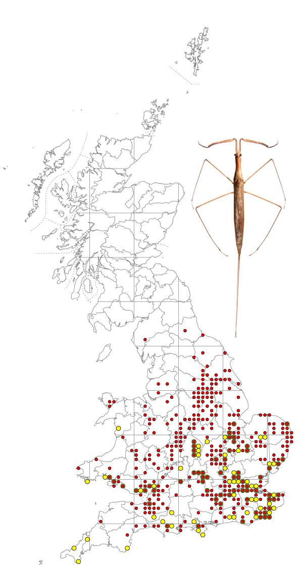 ranatra-linearis-map