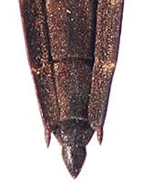 Aquarius-najas-abdomen