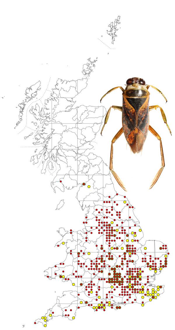 Nototecta-maculata-+-map