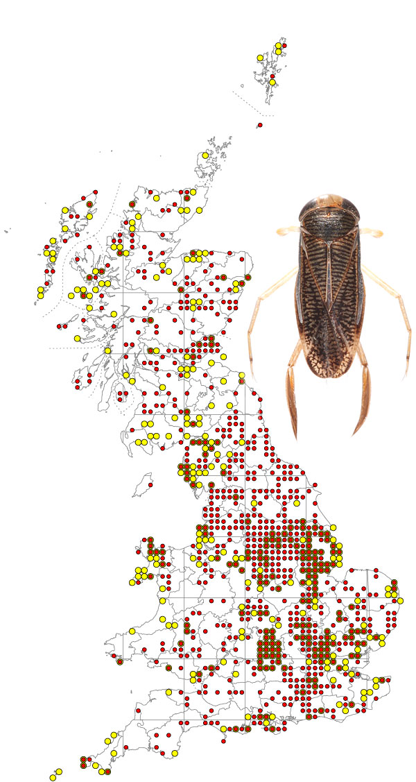 sigara-nigrolineata-map